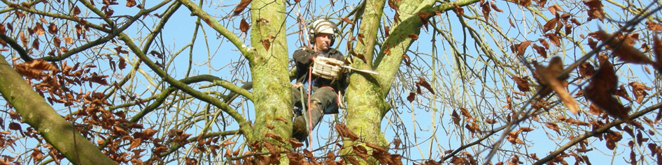 william wolf tree surgeon